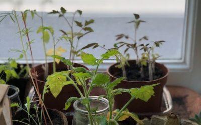 La co construction d'un mur végétal ou l'entrée dans l'écocitoyenneté!