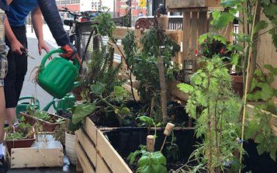 Atelier jardinage